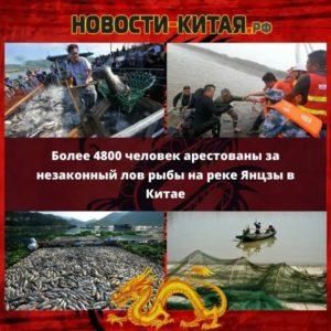 Более 4800 человек арестованы за незаконный лов рыбы на реке Янцзы в Китае Новости Китая
