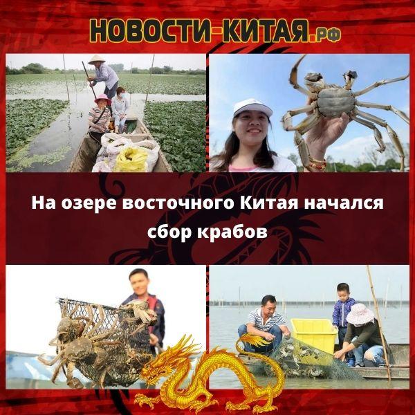 На озере восточного Китая начался сбор крабов Новости Китая