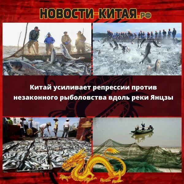 Китай усиливает репрессии против незаконного рыболовства вдоль реки Янцзы