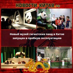 Новый музей гигантских панд в Китае запущен в пробную эксплуатацию