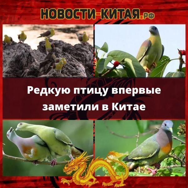 Редкую птицу впервые заметили в Китае Новости Китая
