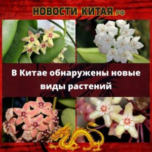 В Китае обнаружены новые виды растений Новости Китая