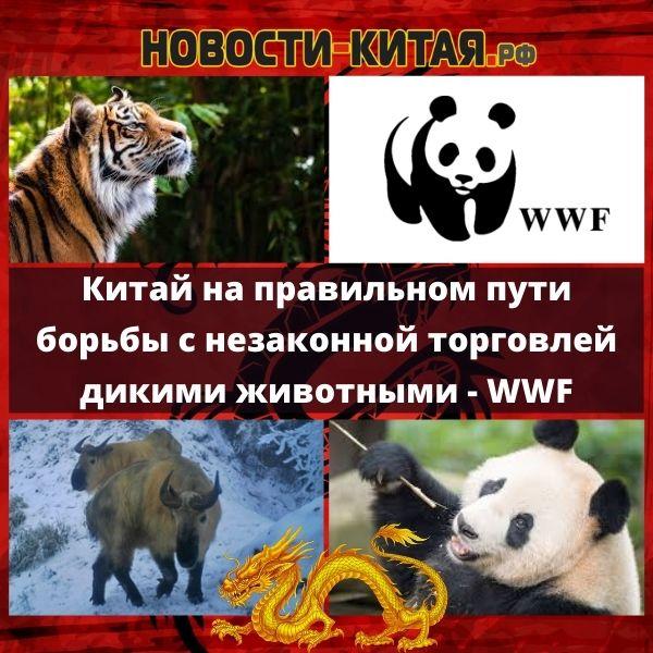 Китай на правильном пути борьбы с незаконной торговлей дикими животными - WWF Новости Китая