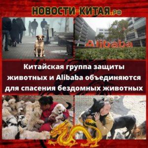 Китайская группа защиты животных и Alibaba объединяются для спасения бездомных животных