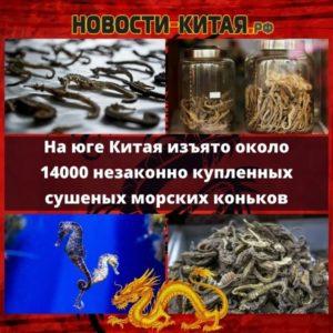 На юге Китая изъято около 14000 незаконно купленных сушеных морских коньков Новости Китая