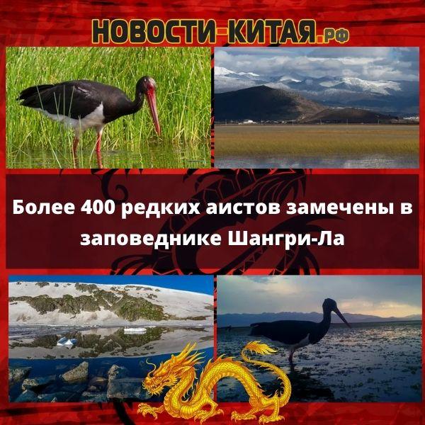 Более 400 редких аистов замечены в заповеднике Шангри-Ла