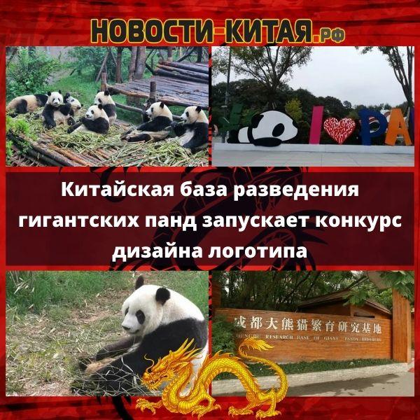 Китайская база разведения гигантских панд запускает конкурс дизайна логотипа
