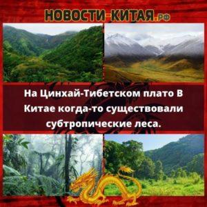 На Цинхай-Тибетском плато В Китае когда-то существовали субтропические леса.