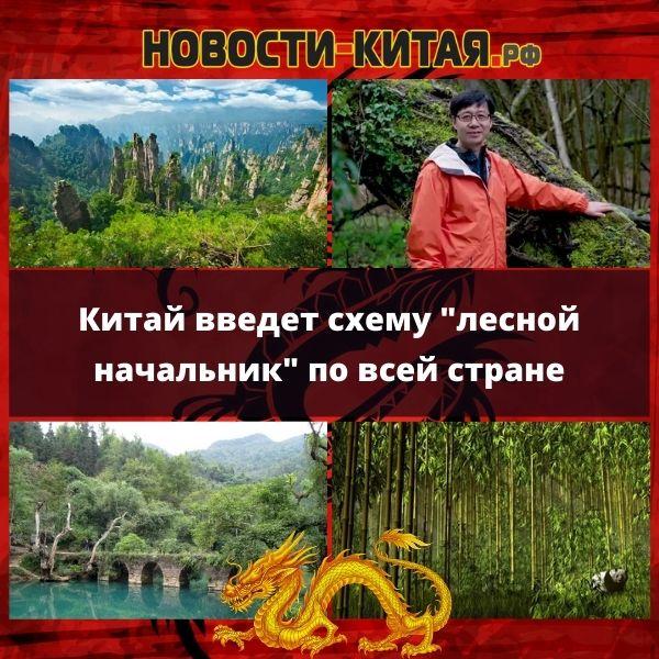 """Китай введет схему """"лесной начальник"""" по всей стране"""