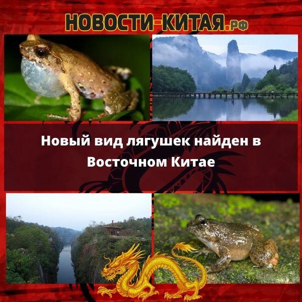 Новый вид лягушек найден в Восточном Китае