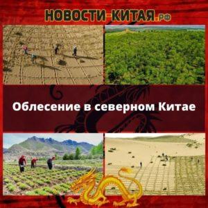 Облесение в северном Китае Новости Китая