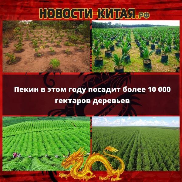 Пекин в этом году посадит более 10 000 гектаров деревьев