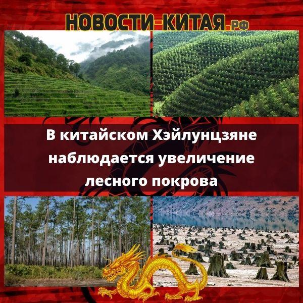 В китайском Хэйлунцзяне наблюдается увеличение лесного покрова Новости Китая