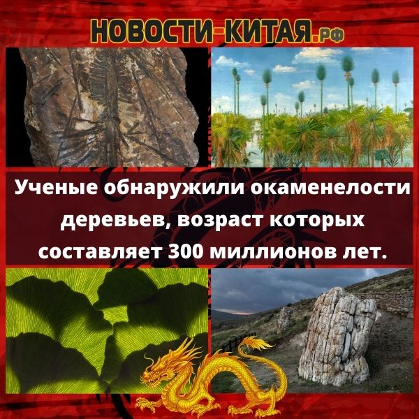 Ученые обнаружили окаменелости деревьев, возраст которых составляет 300 миллионов лет.