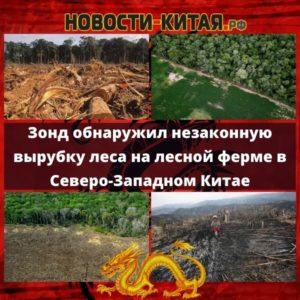 Зонд обнаружил незаконную вырубку леса на лесной ферме в Северо-Западном Китае