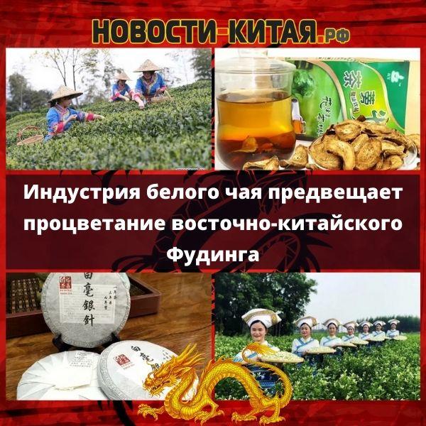 Индустрия белого чая предвещает процветание восточно-китайского Фудинга