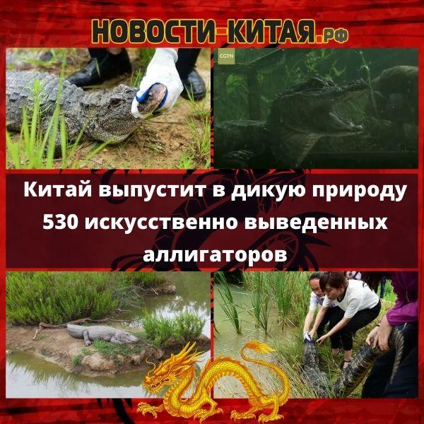 Китай выпустит в дикую природу 530 искусственно выведенных аллигаторов