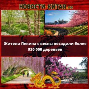 Жители Пекина с весны посадили более 930 000 деревьев