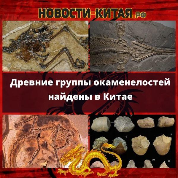 Древние группы окаменелостей найдены в Китае