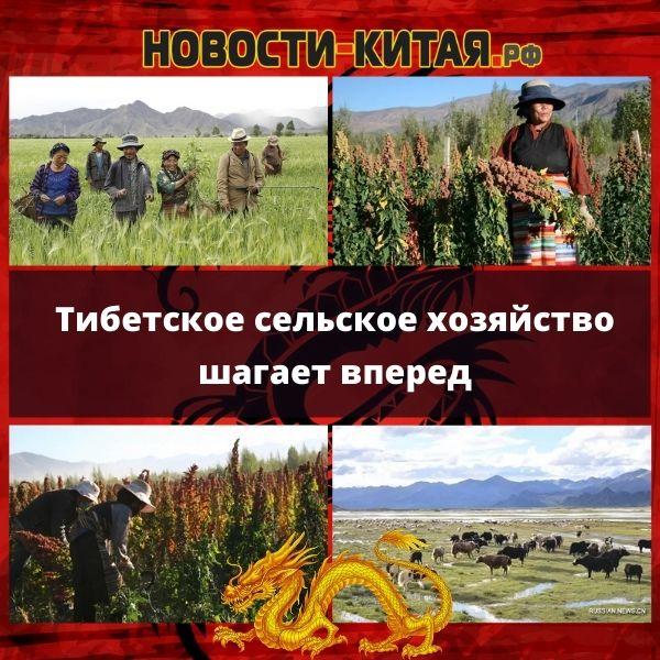 Тибетское сельское хозяйство шагает вперед
