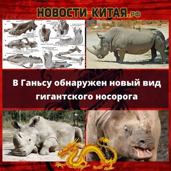 В Ганьсу обнаружен новый вид гигантского носорога