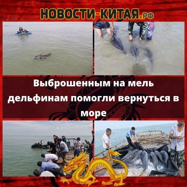 Выброшенным на мель дельфинам помогли вернуться в море