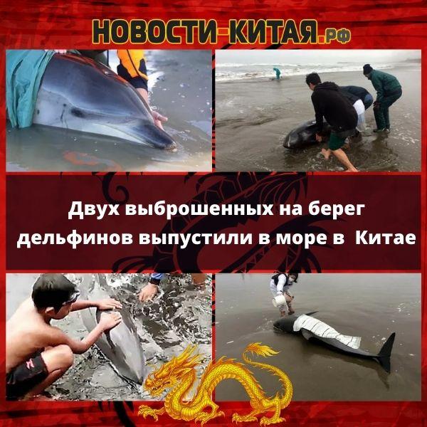 Двух выброшенных на берег дельфинов выпустили в море в Китае