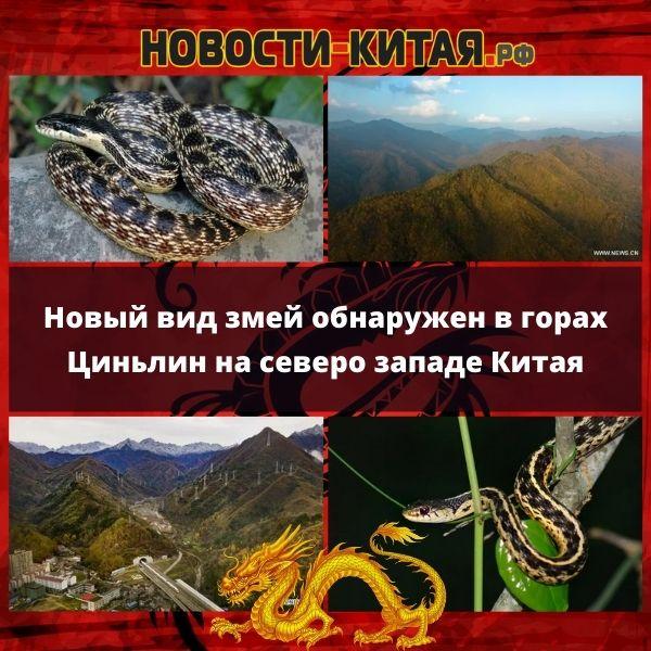 Новый вид змей обнаружен в горах Циньлин на северо западе Китая